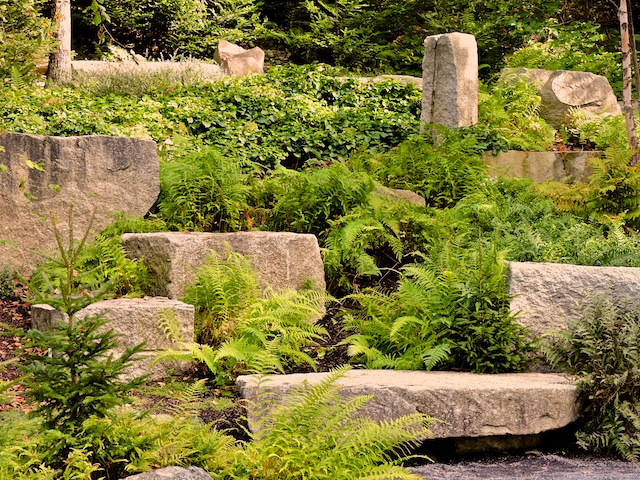Coastal Maine Botanical Gardens. Granite Features Among The Ferns
