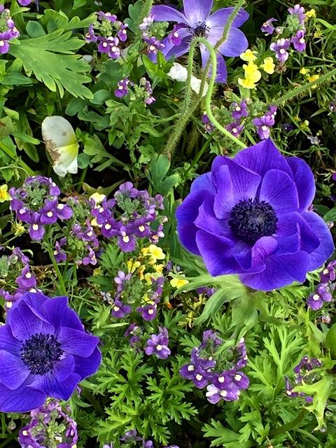 Memorable Gardens 2015