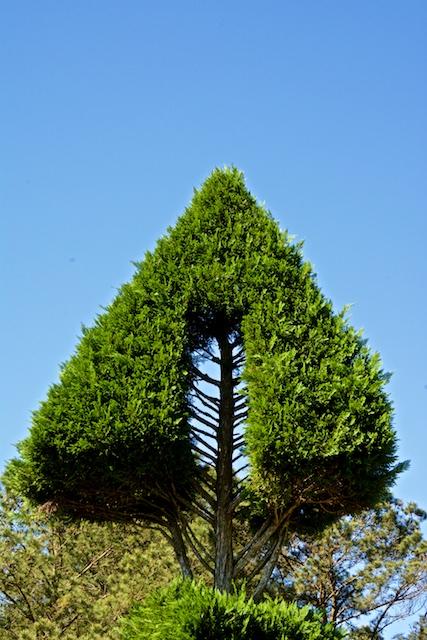 Pearl Fryar Topiary Garden, Bishopville, South Carolina