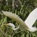 Audubon Swamp Garden  Magnolia Plantation, Charleston, SC