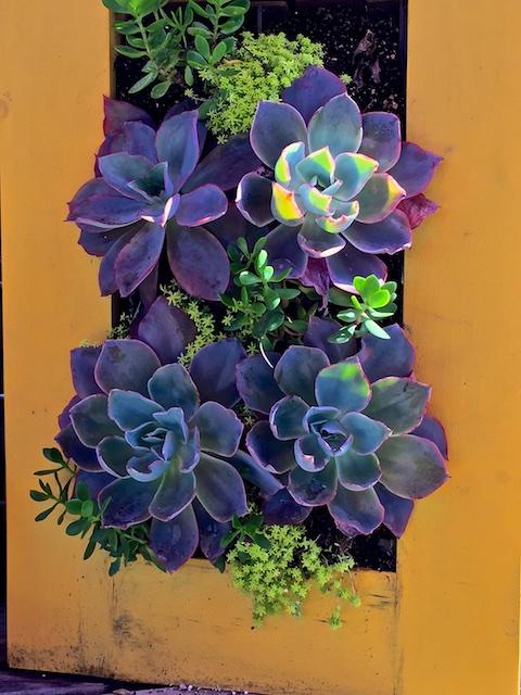 A Gardener's Legacy,  The Ruth Bancroft Garden,