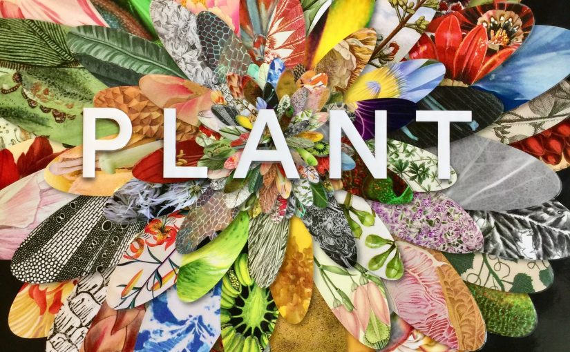 Plant, Exploring The Botanical World