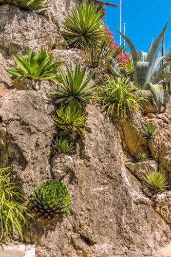 Jardin Exotic, Monte Carlo, Monaco