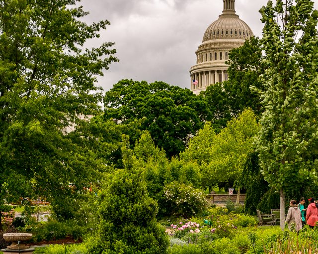 Peace & Tranquility in Washington D. C.