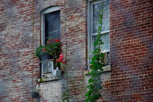 A Gardener lives in Harlem, NYC