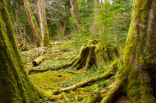 Just Moss