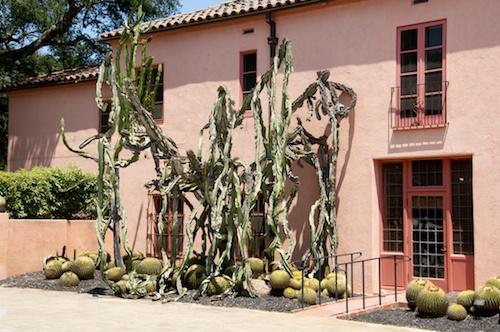 Giant weeping Euphorbias & Golden Barrel Cactus