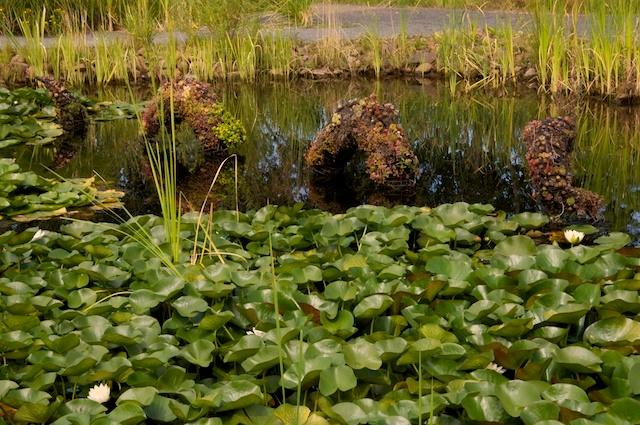 Water Garden Succulent Monster