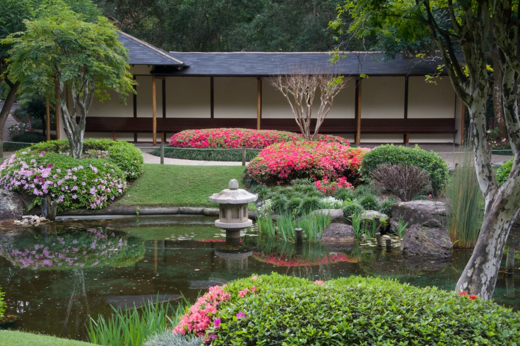 Japanese Garden, Azaleas in bloom