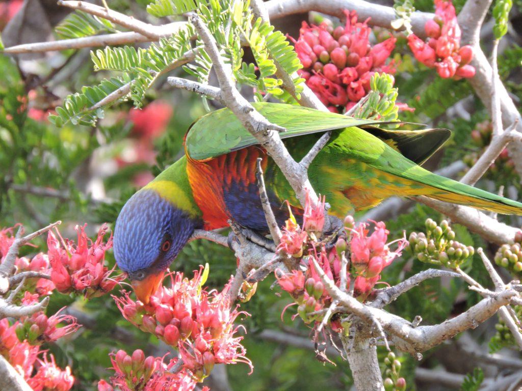 Brisbane Botanic Gardens: