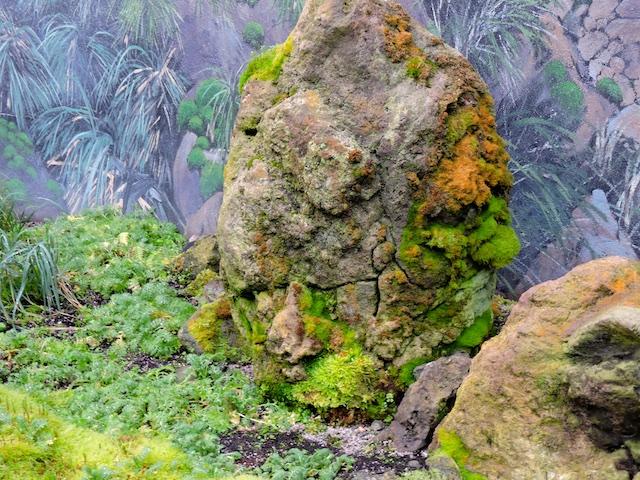 Moss, Lichen, & Tufted Grass, (Feldmark)