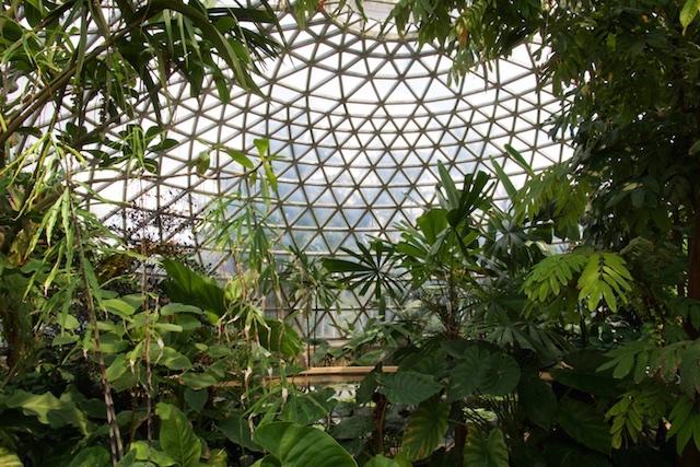 North Coast Botanic Garden Conservatory, Queensland, Australia