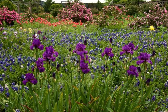 clark gardens 13