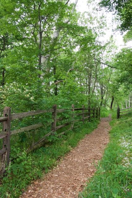 A path through Bartram's trees