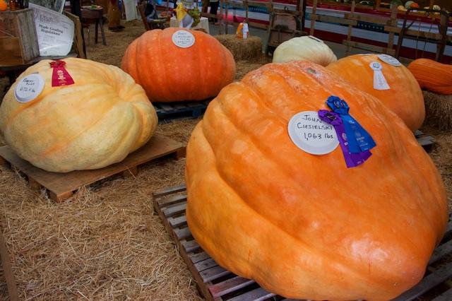 The Biggest Pumpkin 1063 lbs.