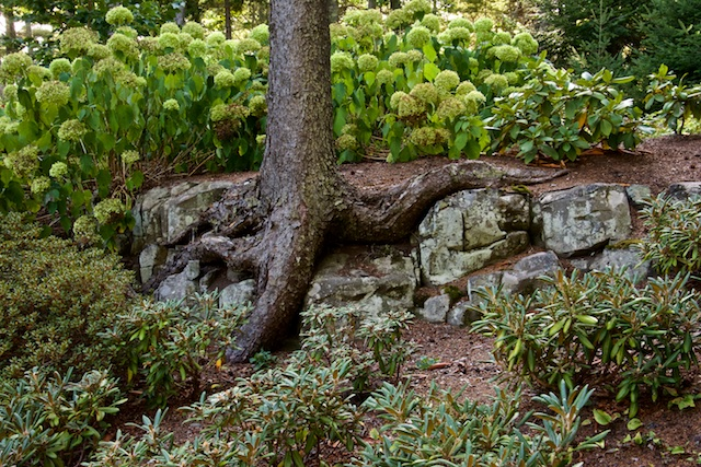 A tree roots over the stone