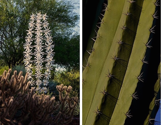 The spines of the cactus radiate out from the areole.