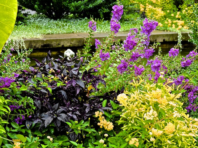 Accents of purple, yellow and aubergine