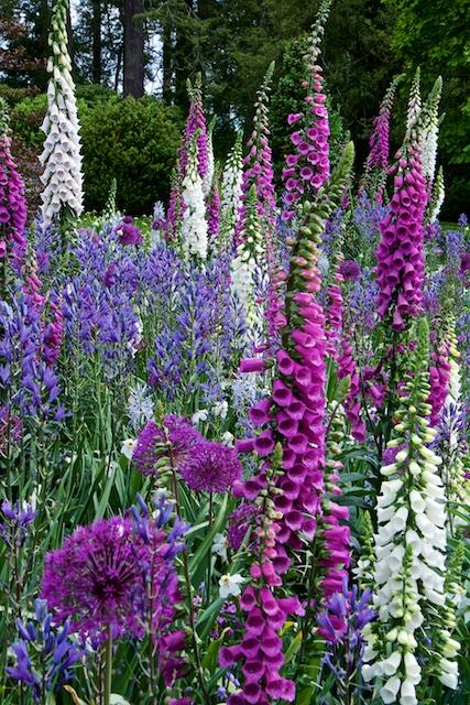 Long Garden Longwood Gardens