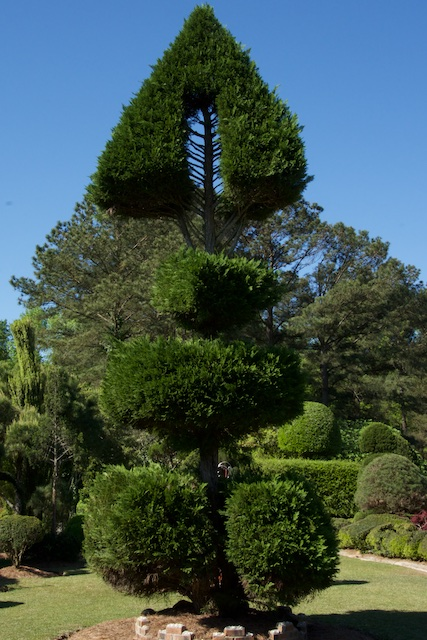 Fishbone tree from Leyland Cypress