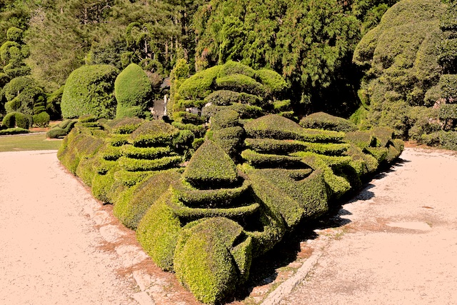 Topiary Bushes