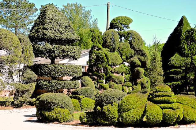 Even one such topiary would be a delight
