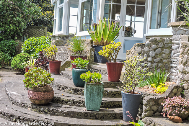 A potted garden