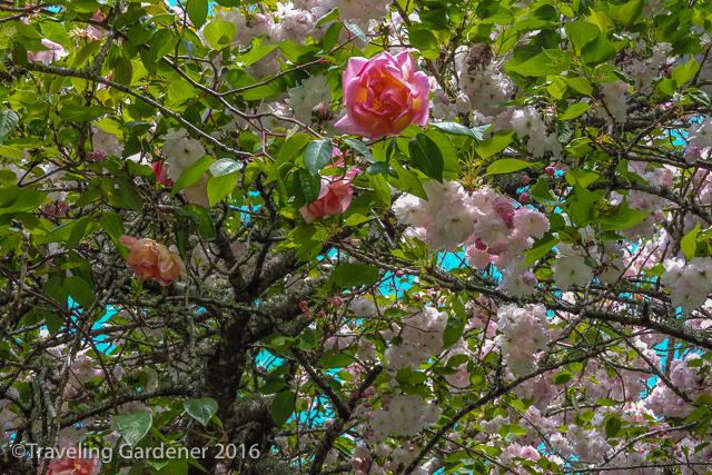 20161104oakley-garden4009