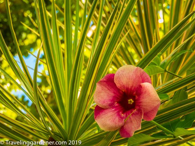 Forgotten Gardens of the Îles du Salut