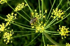 Pollinators, #4