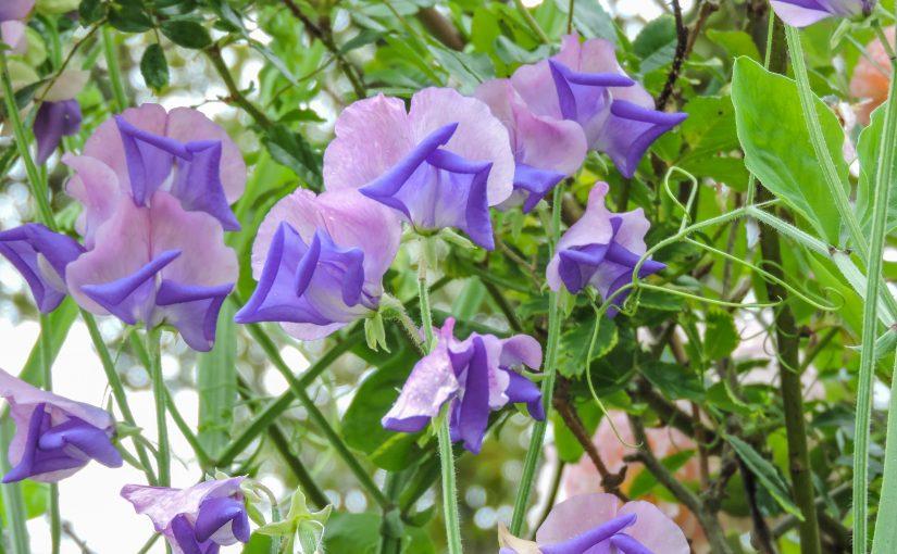 Most Memorable Garden Moments 2016