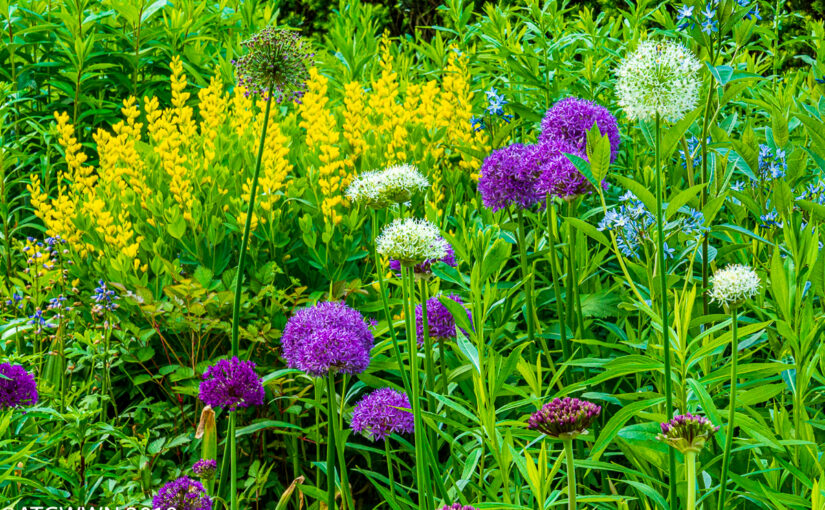 yellow, purple and white flowers